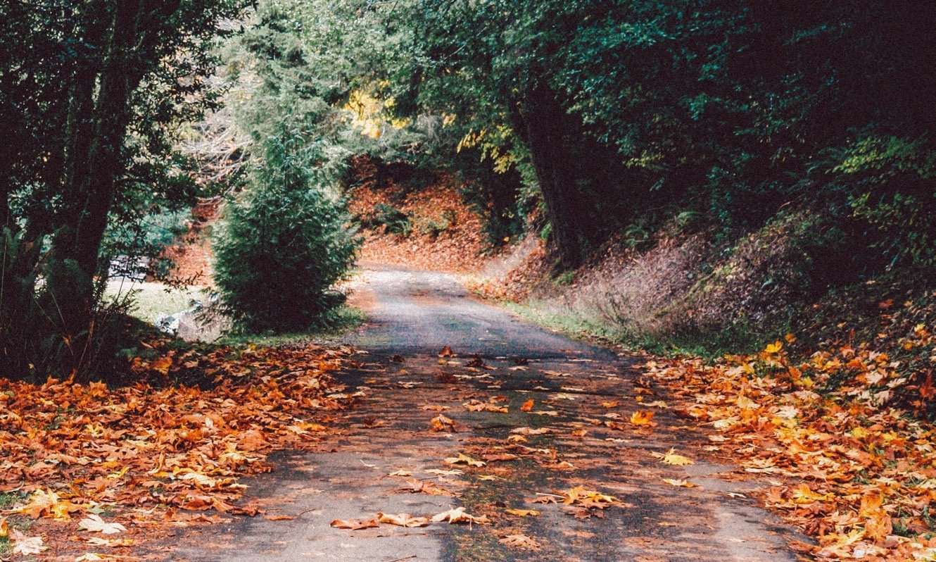 Autumn road with fallen leaves