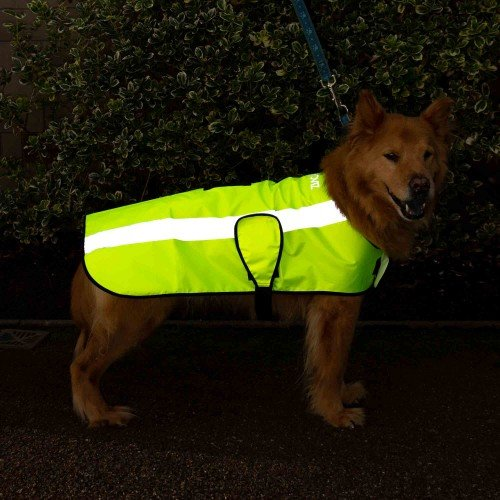 NEW: Classic Hi Visibility Waterproof Dog Coat