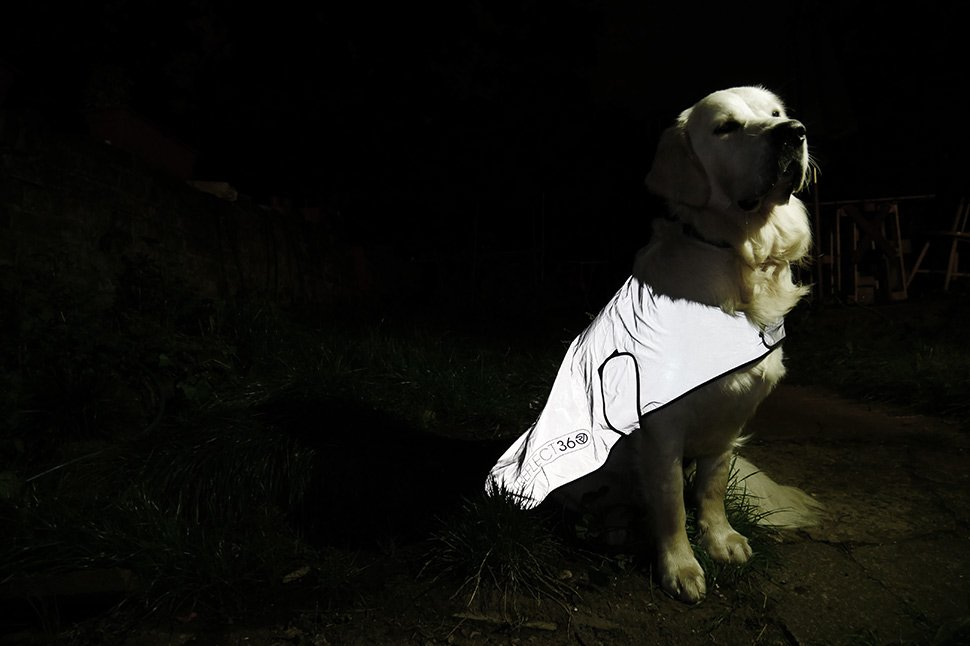 Proviz's REFLECT360 reflective jacket for your dog at night